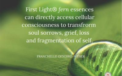 Cellular Consciousness